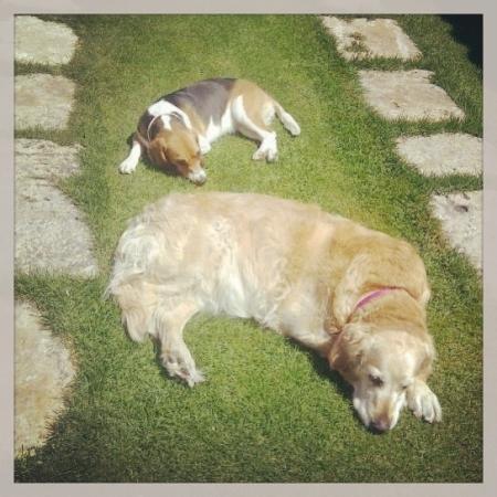 @La intención es estar mucho tiempo como Duna y Maya en esta foto